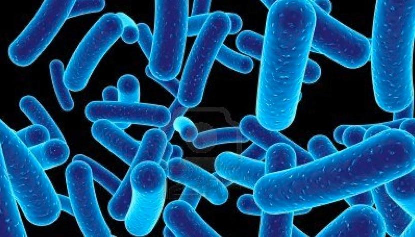 1066811-many-bacteria